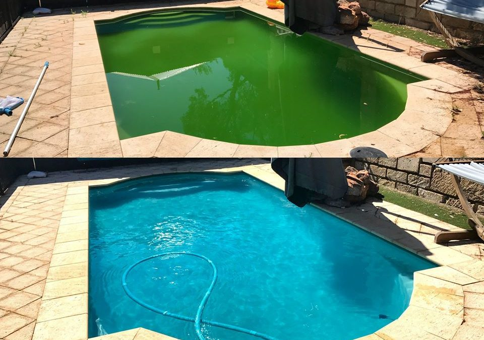 Its Green Pool Season Again